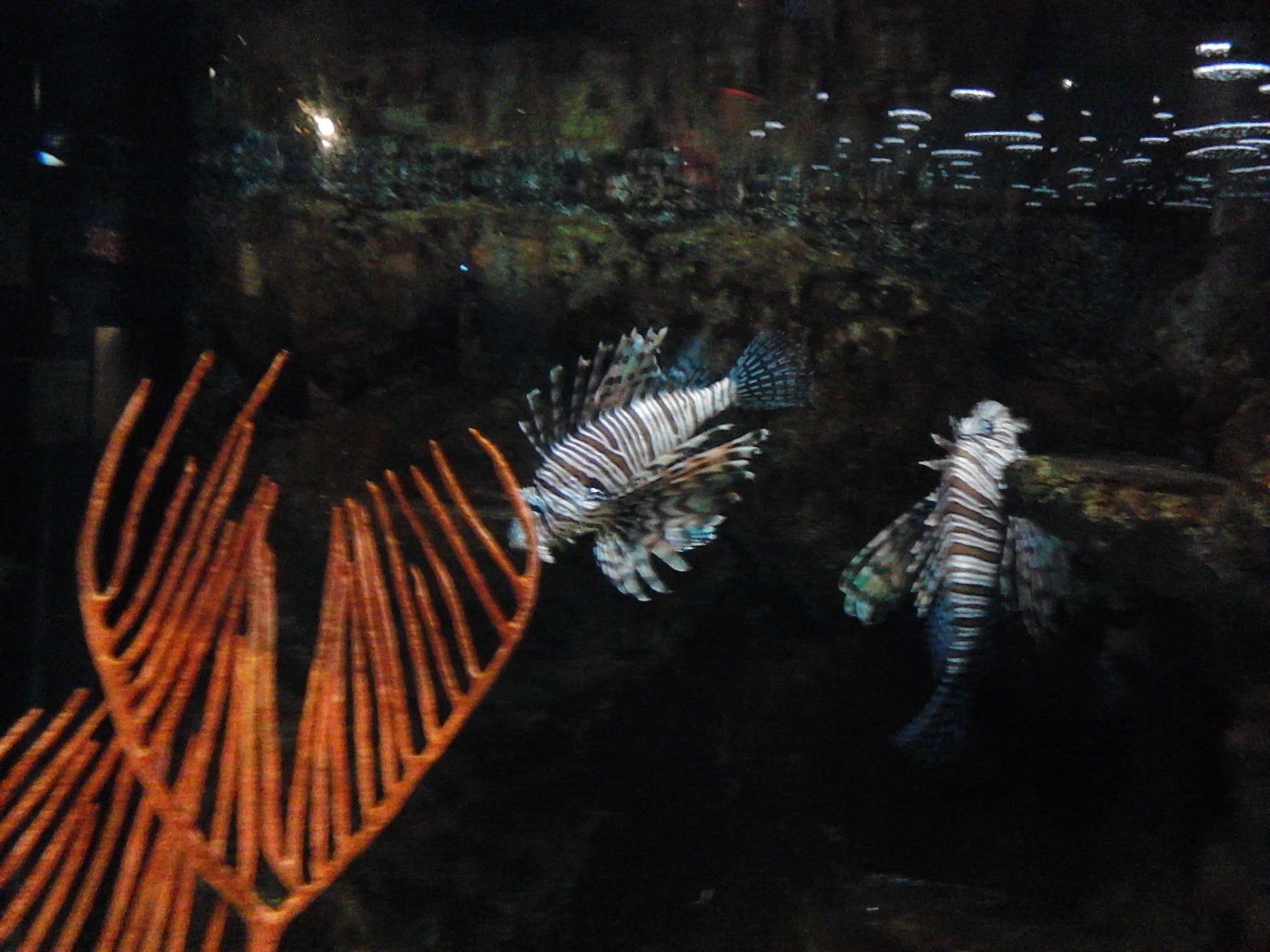 Great Lakes Aquarium Dora And The Explorers