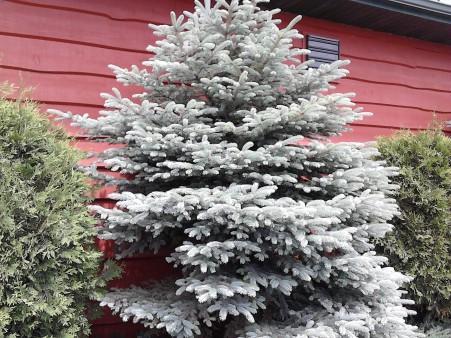 christmas tree border bobs