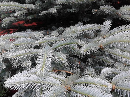 christmas tree up close