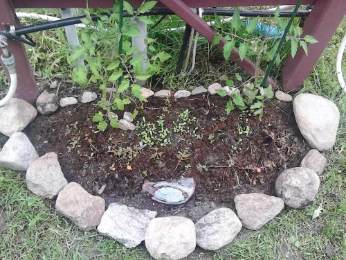 gardenwithrockscloseup