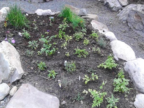herb garden again