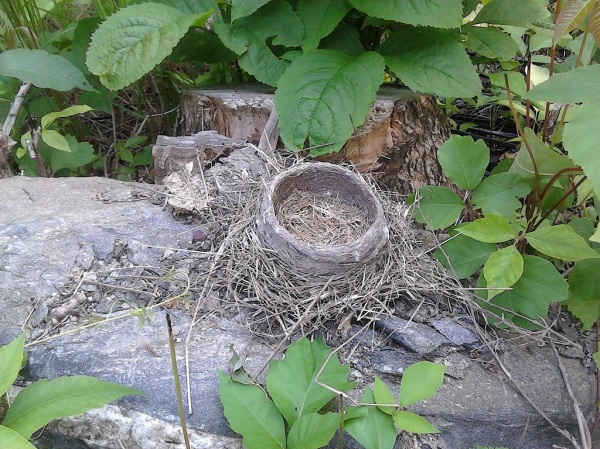 empty robins nest small