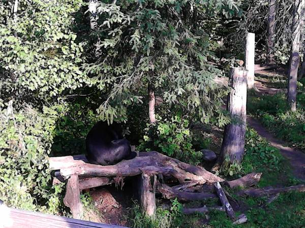 bears one on tree