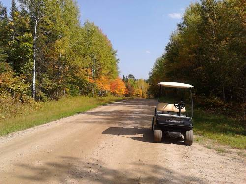 leaves and golf cart