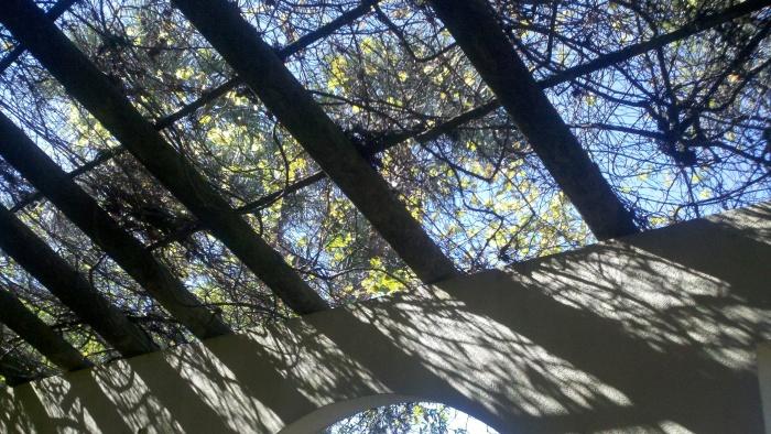 lakeridge overhead vine