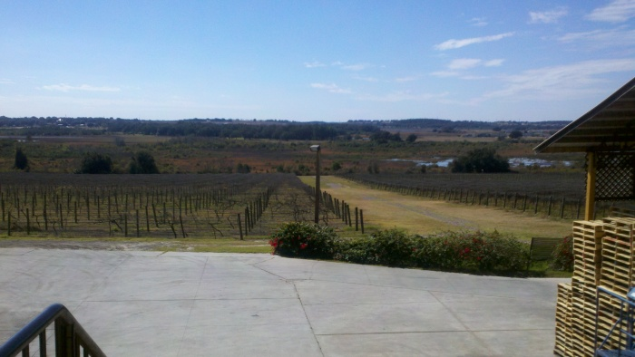 lakeridge vineyard