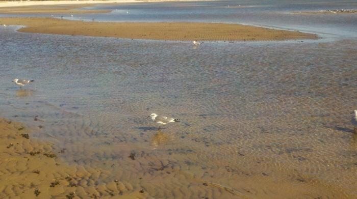 water bird sand