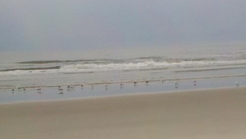 sa beach birds