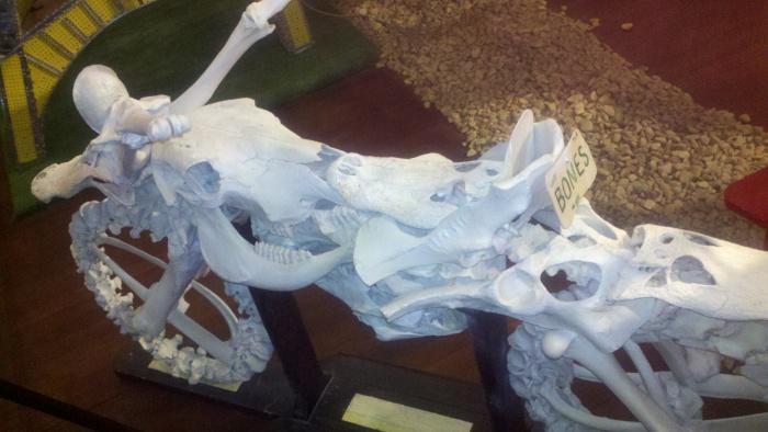 sa rbin bones cycle