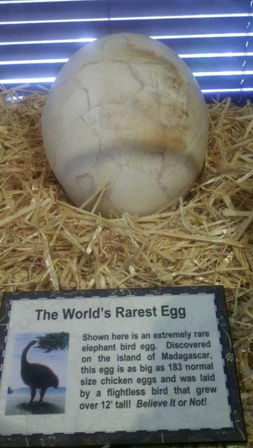 sa rbin egg
