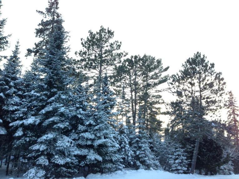 nlro winter
