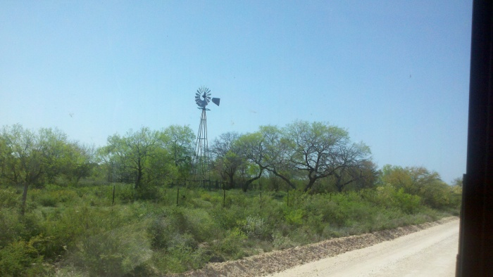 windmill crippled trees