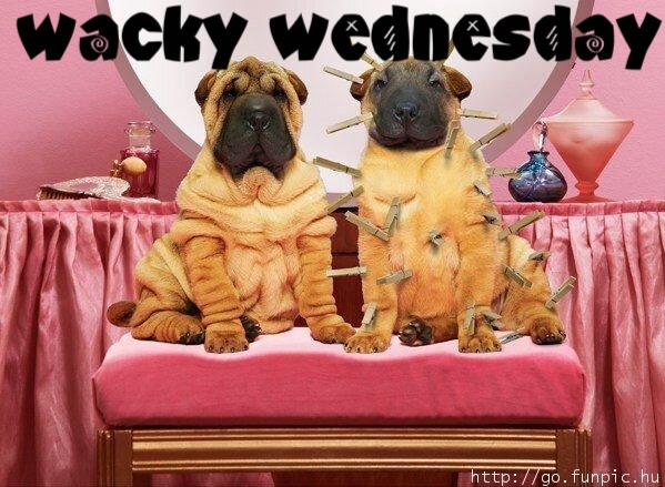 wacky_wednesday-8279