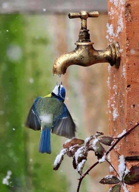 bird water faucet
