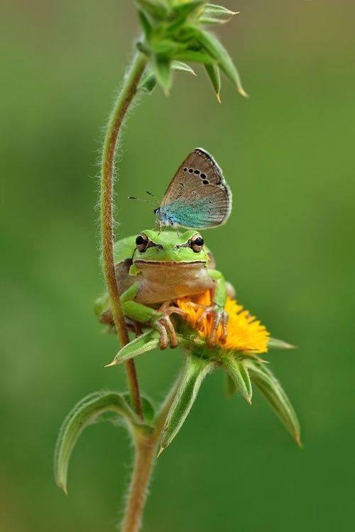 froggie butterfly flower