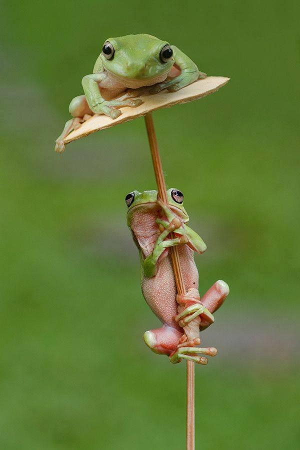 froggies on pole