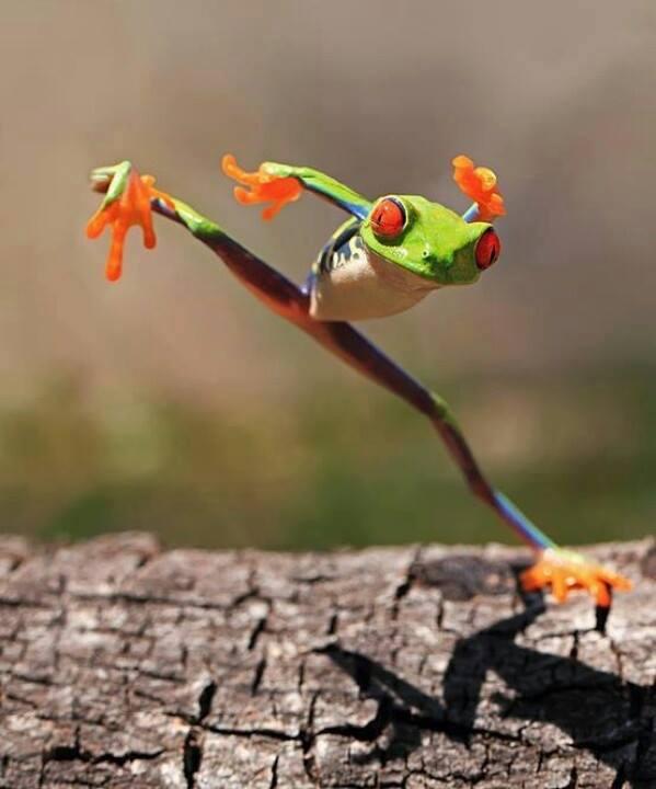 froggies stretching