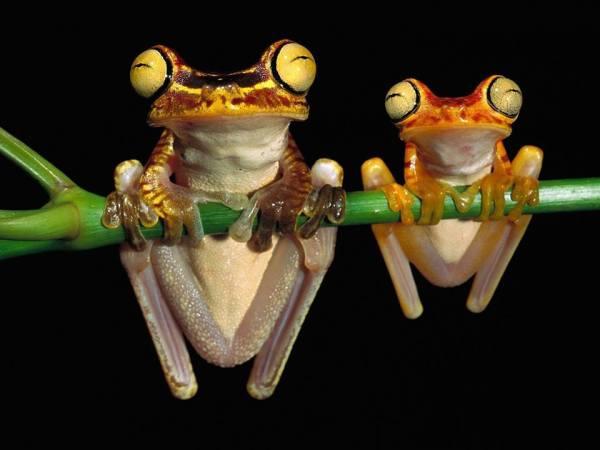 froggies two