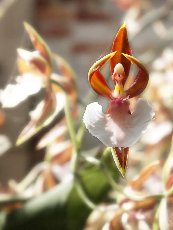 ODD FLOWERS 7