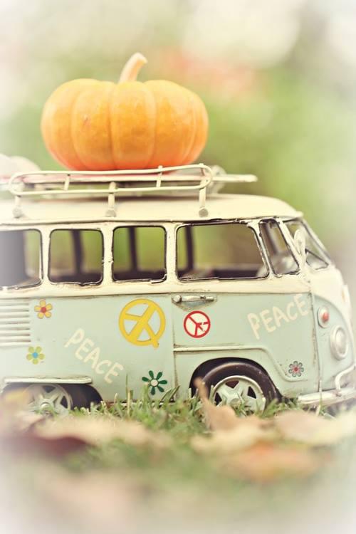 pumpkin on peace van
