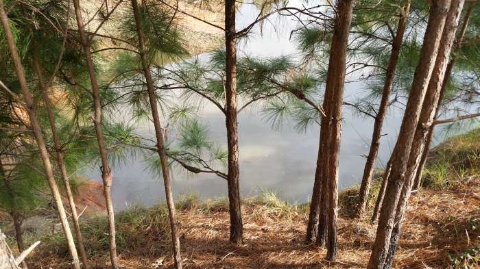 pond from hill by trees