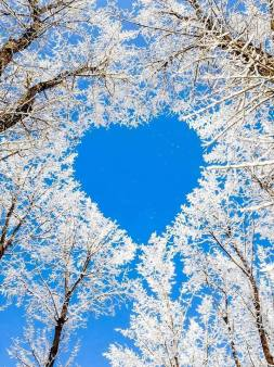 valentine white trees