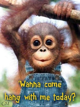 wanta hang