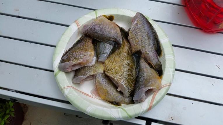 unfried fish