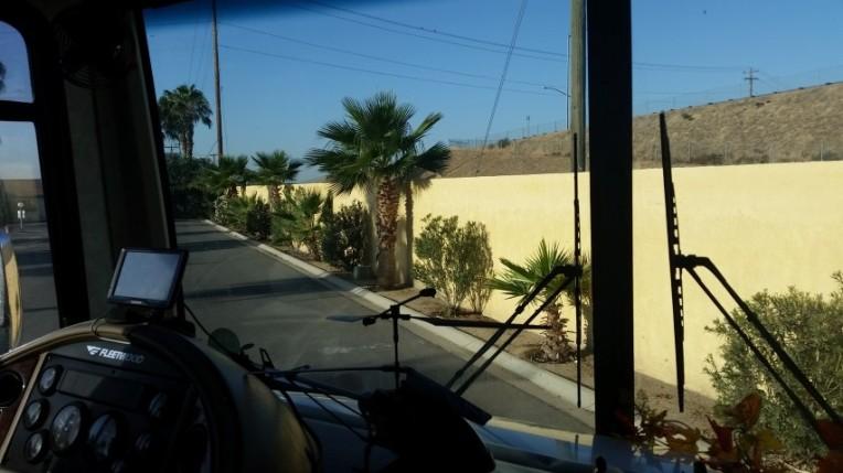 desert palms in bakerfield 2 (Small)