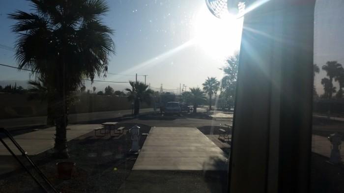 desert palms in bakersfield (Small)
