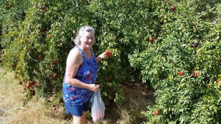 rosalyn and pomegranates (Small)