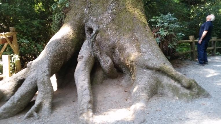 tm 7 elephant tree
