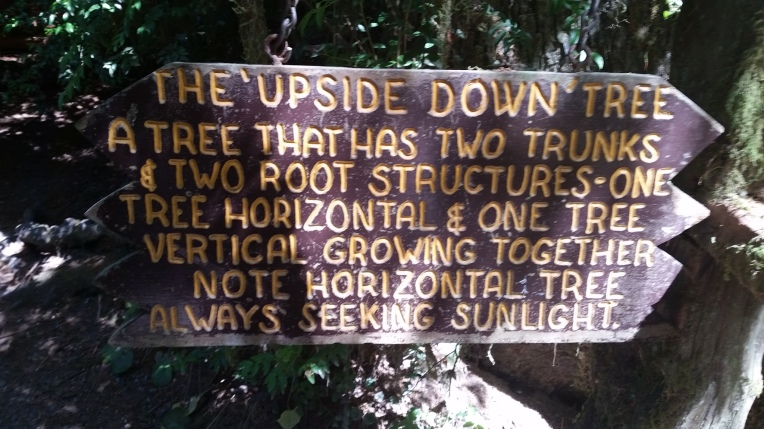 tm8 upside down tree