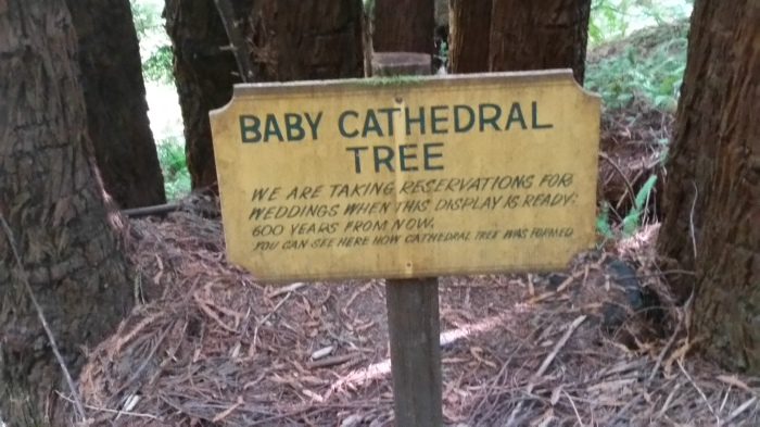 ttt4 baby cathedral