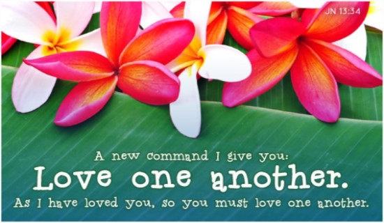 15172-love-one-another-plumeria