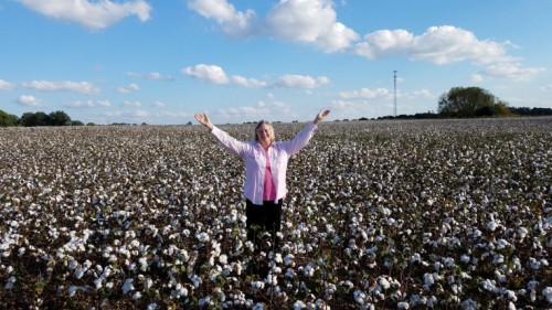 cotton-in-tennessee
