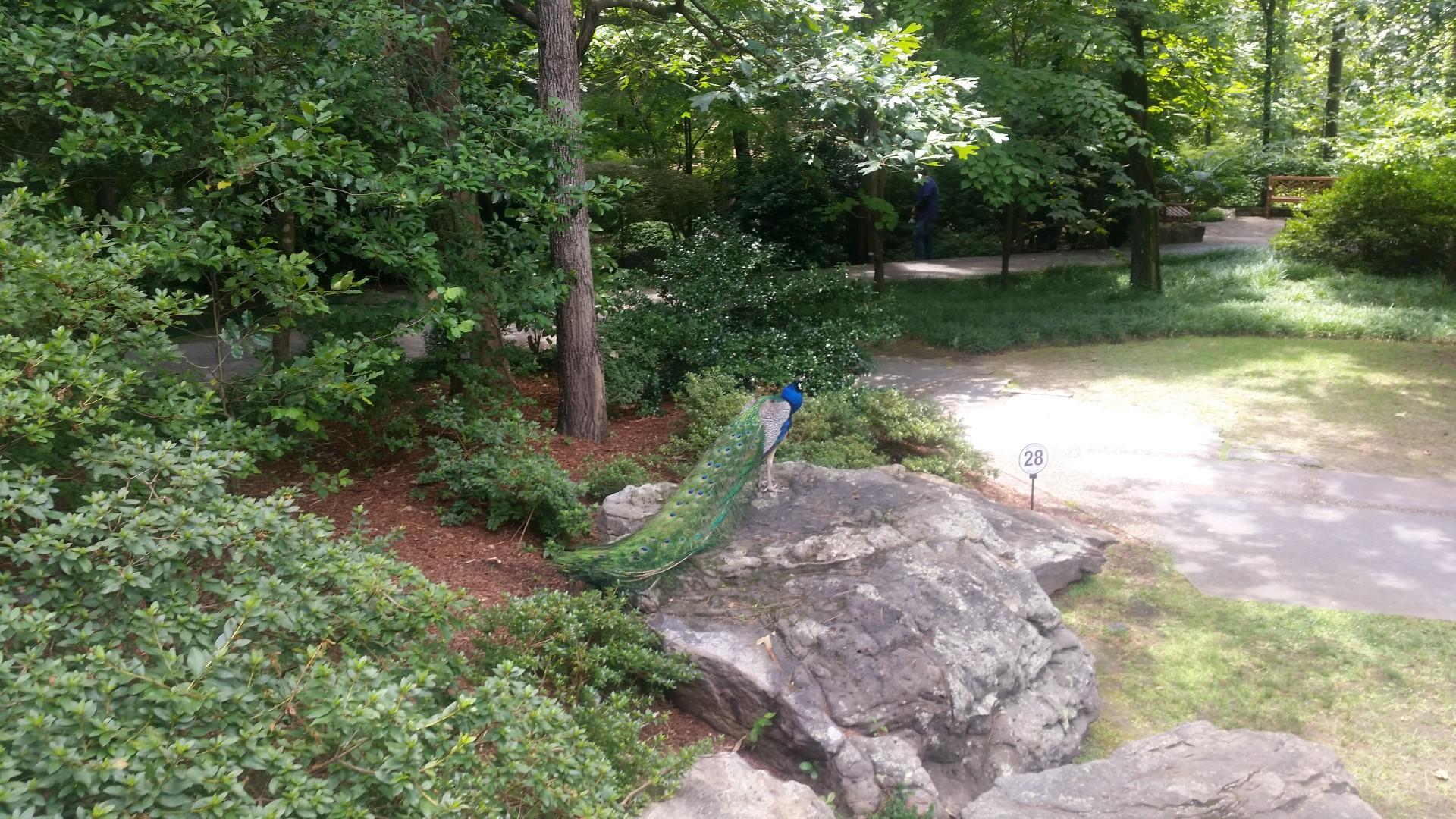 Garvan Woodland Gardens In Hot Springs Arkansas Dora And The Explorers